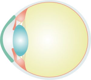 ojo-normal